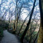 Der Weg zur Burg Eltz